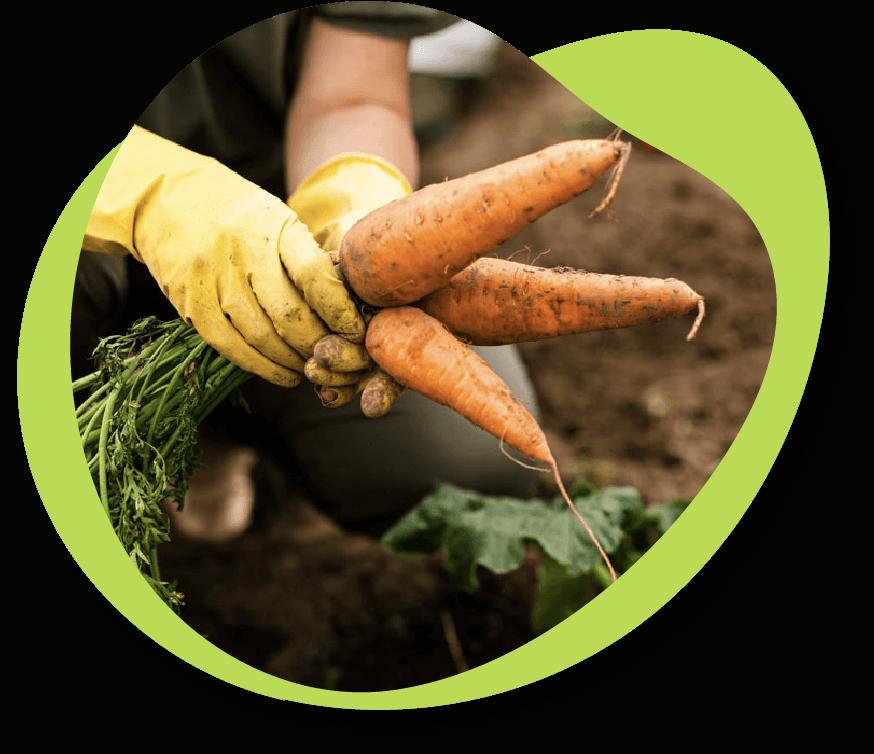Alimentación Sostenible | Instituto Danone